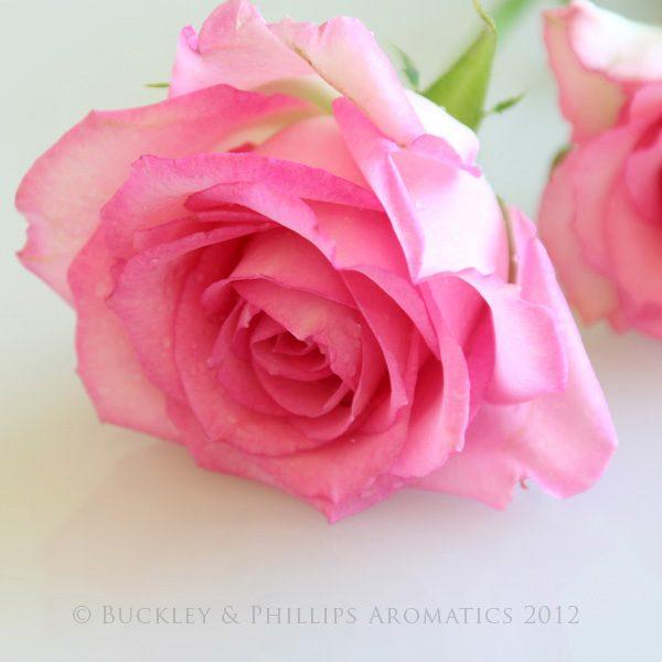 Candle - Simply Pillar - Rose