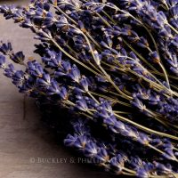Pure Essential Oil - Lavender - Spike