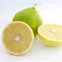 Pure Essential Oil - Bergamot